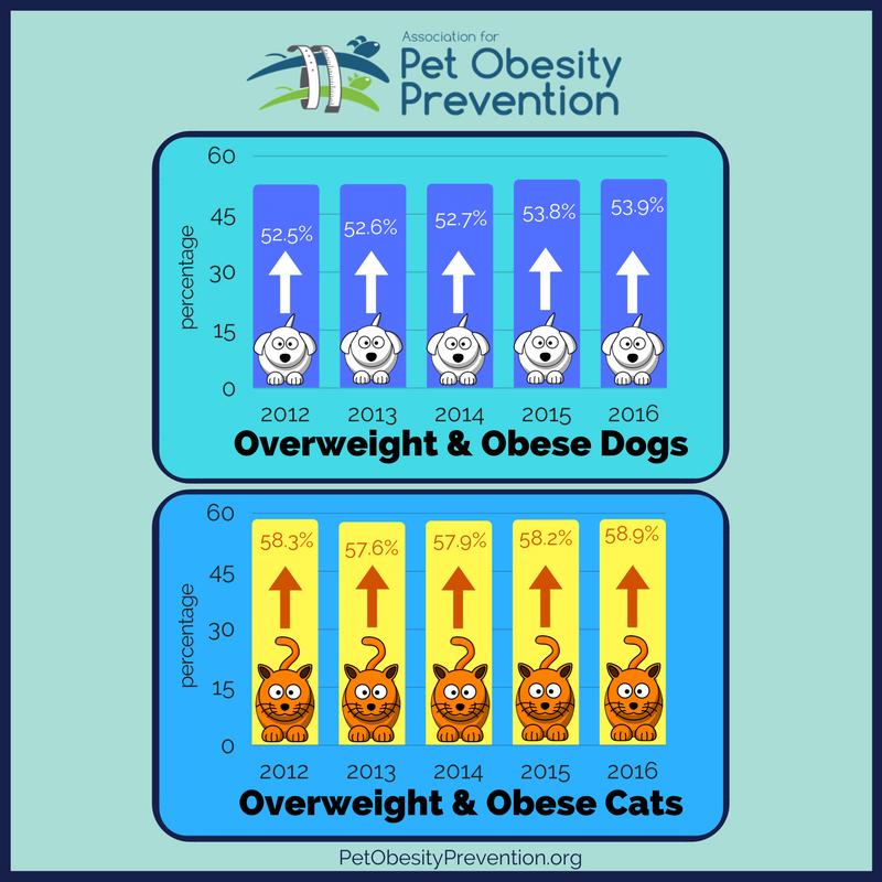 2012-2016+pet+obesity