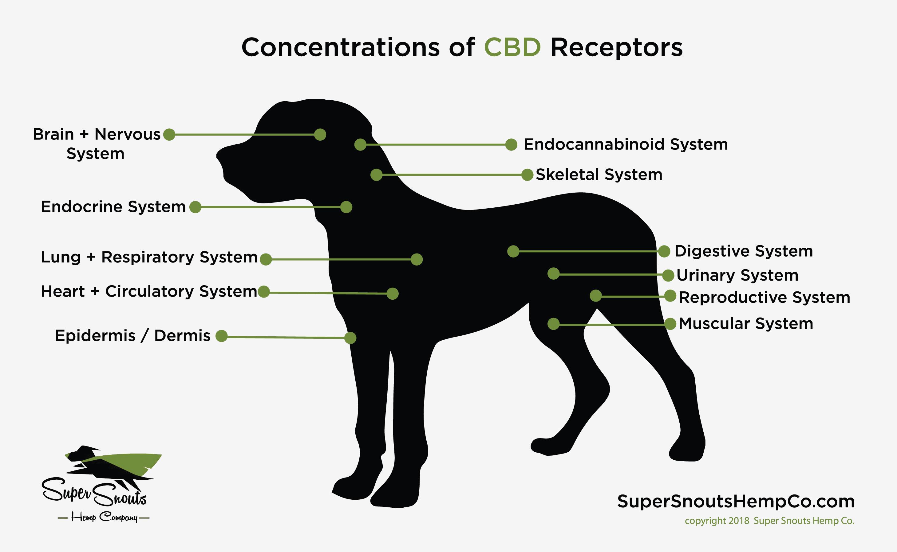 CBD Recptors in Dogs