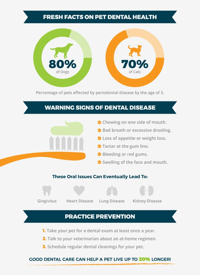 dental-month-infographic