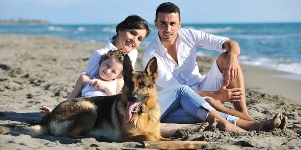 beachdog.jpg