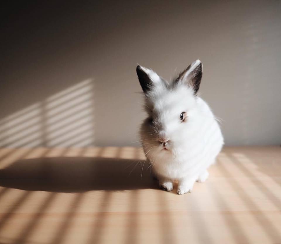 bunny-1.jpg