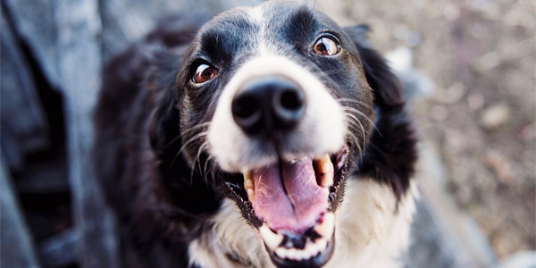 6 Benefits of Limited Ingredient Diets for Dogs