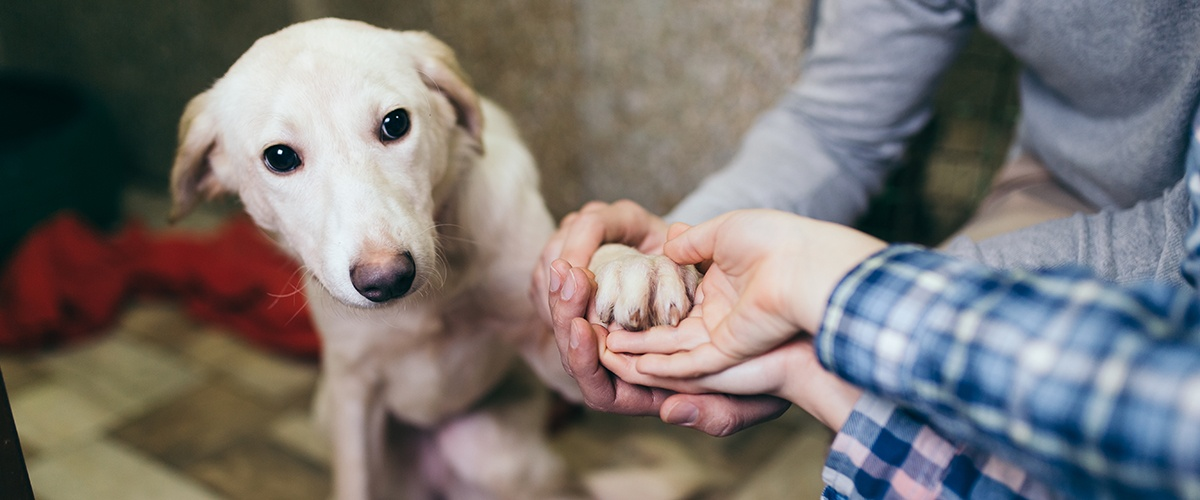 5 Ways to Observe Adopt-a-Shelter-Dog Month in Your Store