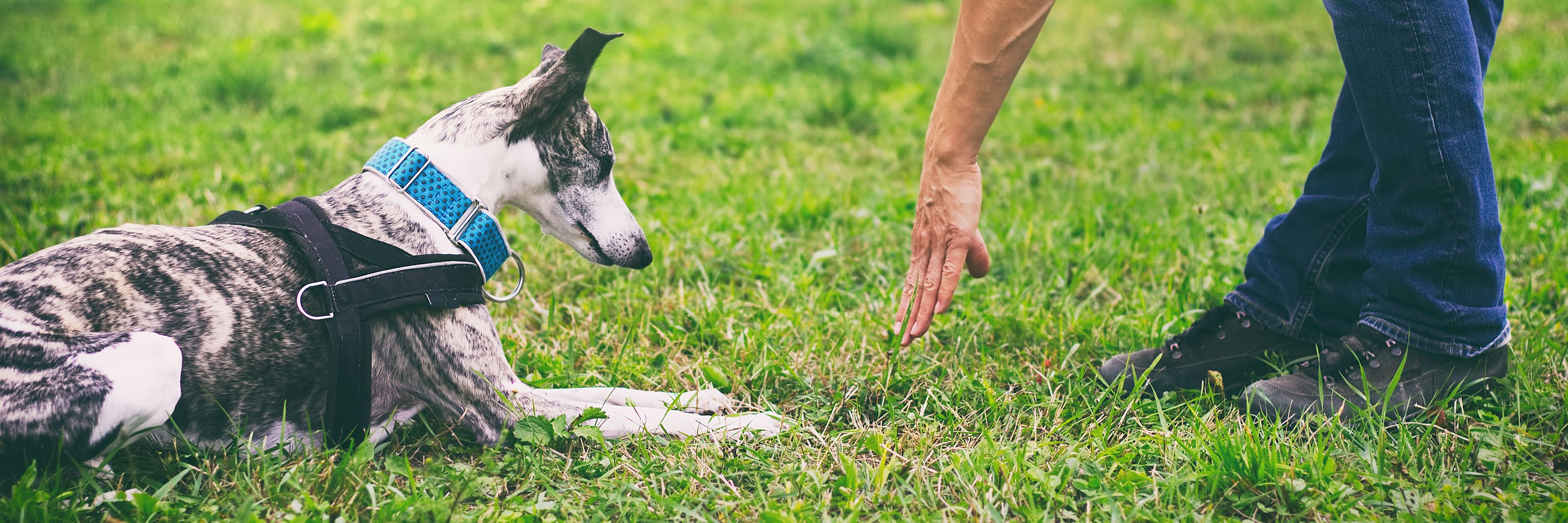 Tips for Boosting Sales During National Train Your Dog Month