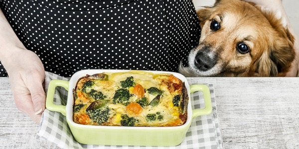 Best and Worst Foods to Share with Dogs
