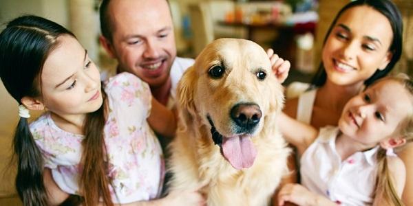 Pet Parents Spent $77 Billion in 2015
